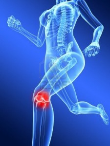 7285935-running-female-skeleton-with-highlighted-knee-joint